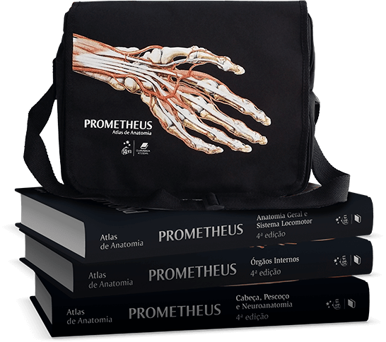 Bolsa Prometheus